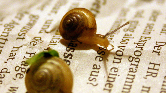 Forgetful snails could tell us about how our memories work