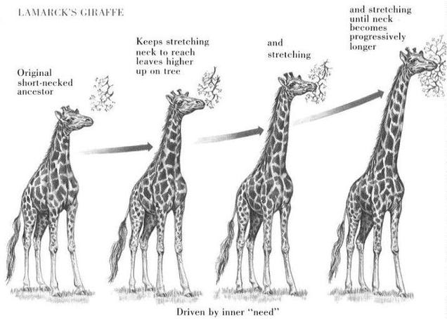 I Am Giraffe Evolutions Evolution 101 The Missing