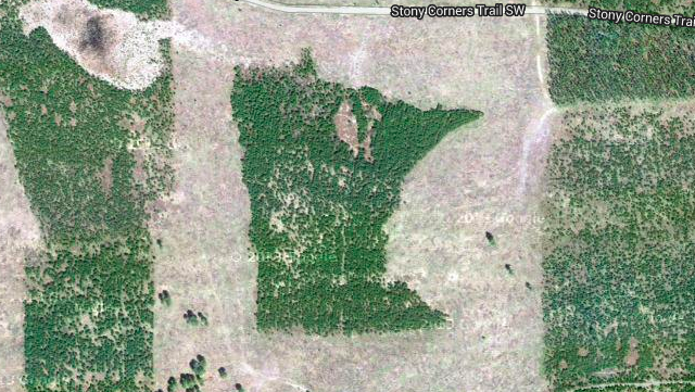 There's A Forest Shaped Like Minnesota In Northern Minnesota