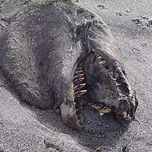 'Monster' Carcass Washes Ashore in New Zealand