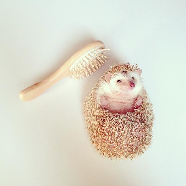 I Had No Clue Hedgehogs Were So Darn Cute