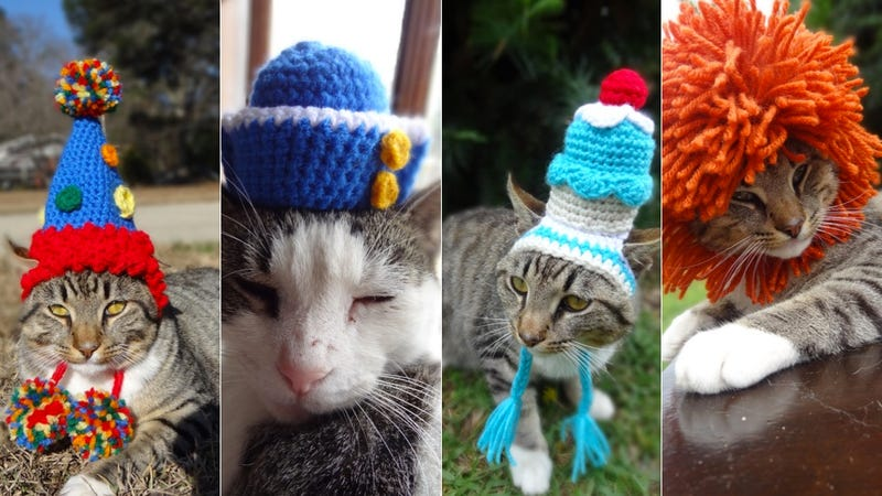 These Animals Need to Check Their Tiny Animal Hat Privilege