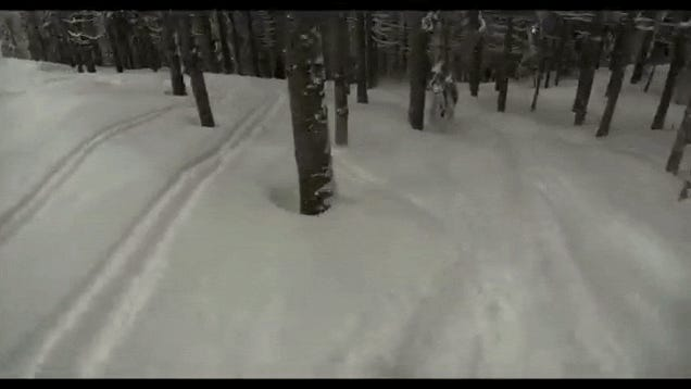 Watch a skier zoom through a forest of trees at unreal speeds