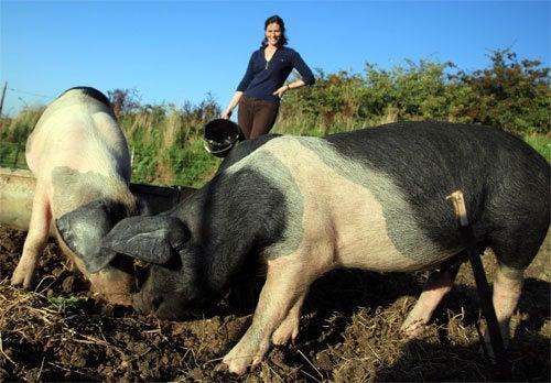 Pigs In Zen