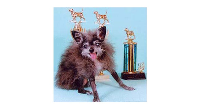10 Years Of The World's Ugliest Dogs