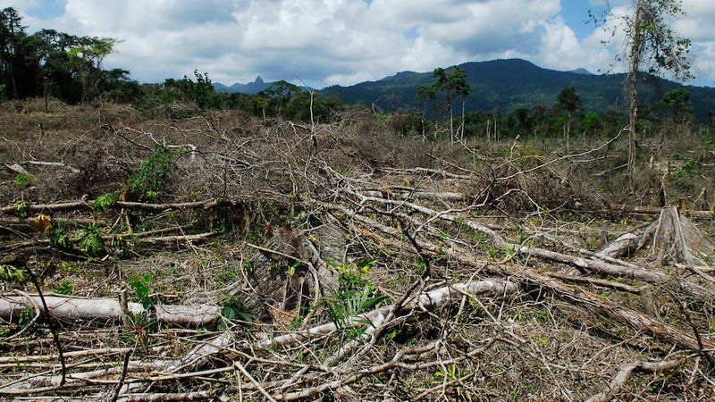 How Drug Trafficking Worsens the Problem of Deforestation