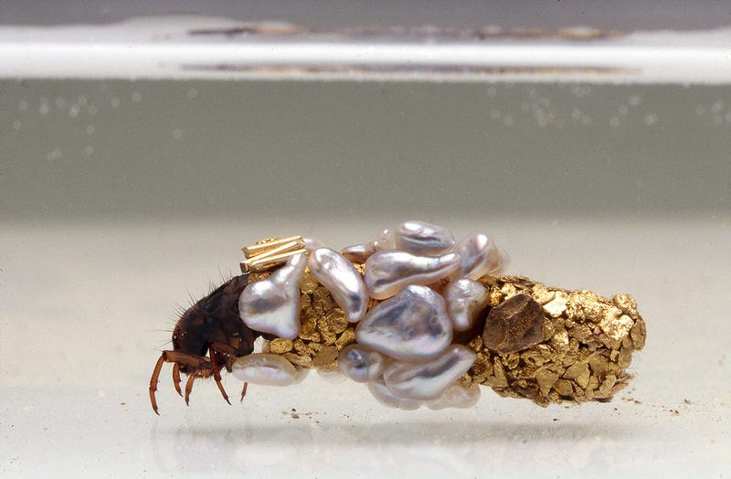 These Insects Build Carapaces of Gold and Pearl