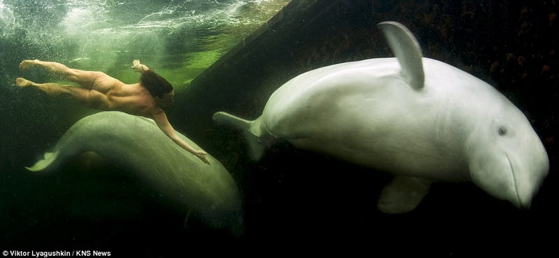 Gorgeous photographs of a naked woman taming beluga whales in frozen Arctic waters