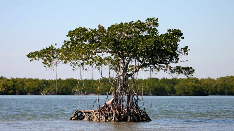 The ugly origins of Florida's beautiful, mysterious tree islands