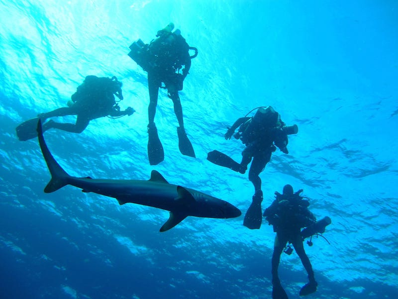 Diving in Shark-Infested Waters -- for Science!