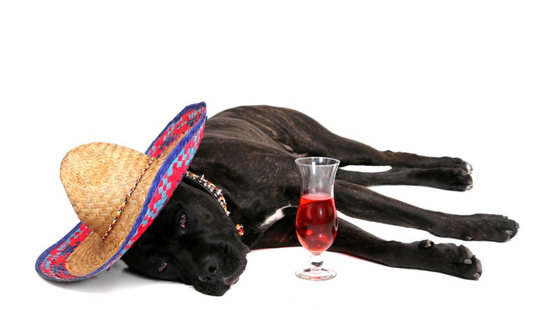 Happy Hour for Dogs Is Now a Thing