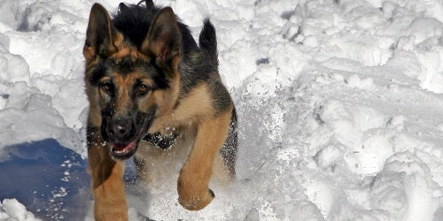 Top 10 Winter Survival Tools and Tactics