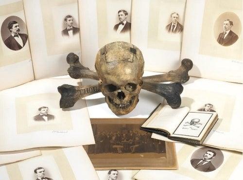 Skull & Bones Skull for Sale