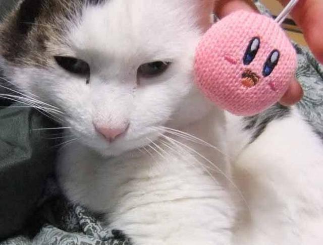 Cats Love Yarn Kirby