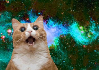 The Video You've Always Wanted: Space Cats Remake Gravity
