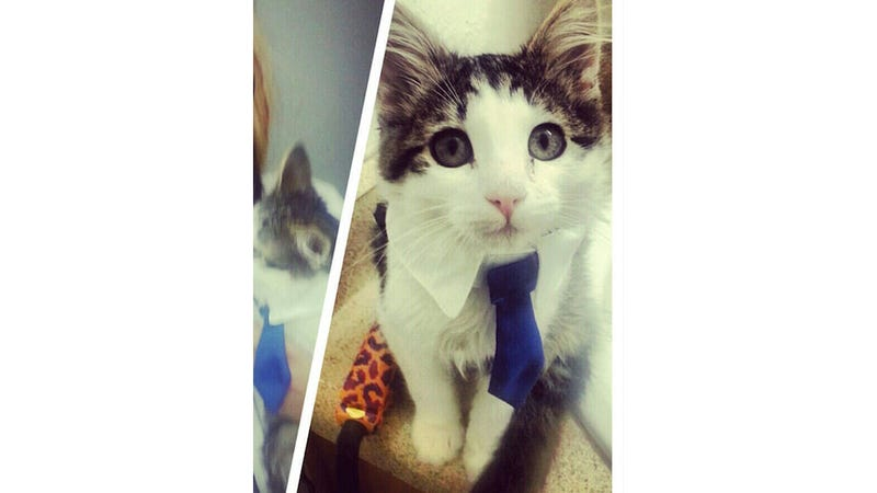 Three Hospitalized After Pet Cat Named Khat Attacks Family