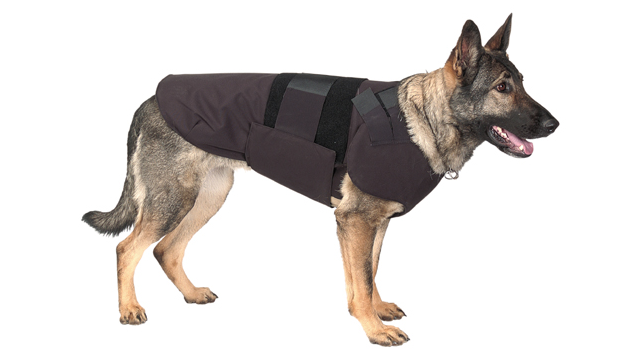 7 Tools to Build the World's Greatest POLICE DOG