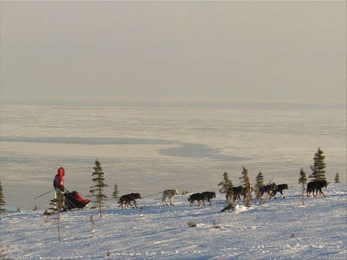 The Low-Grade Acid That Is The Iditarod