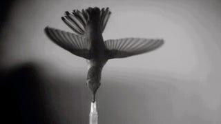 Watch What Happens When You Put A Hummingbird In A Wind Tunnel