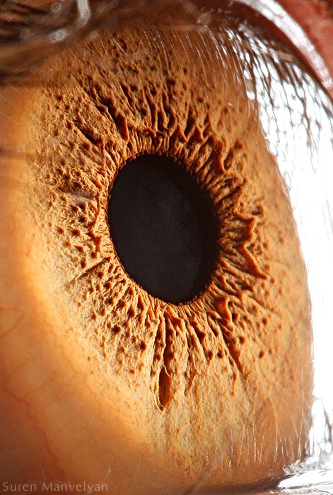 Extreme close-ups of human eyes look like craters on Mars