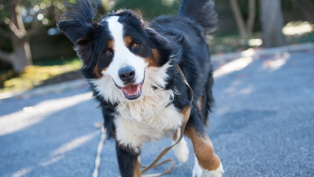 Let Your Love For Your Pet Motivate You (Both) to Exercise