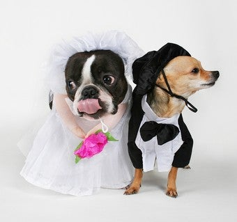 Treat Your Spouse Like A Dog And Find Marital Bliss