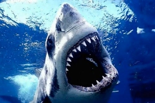 Shark Weak: Inside the Two Types of Shark Week Viewers