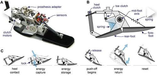 Artificial Foot Gallery