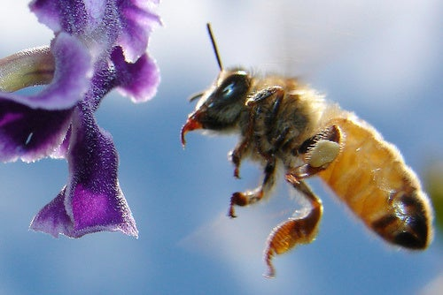 The case of the mass honeybee killer has a new prime suspect