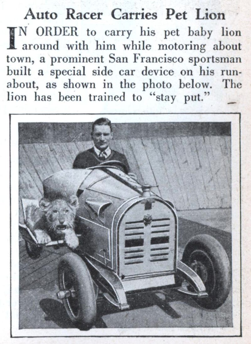 In the 1930s, daredevils would drive up walls with lions for passengers