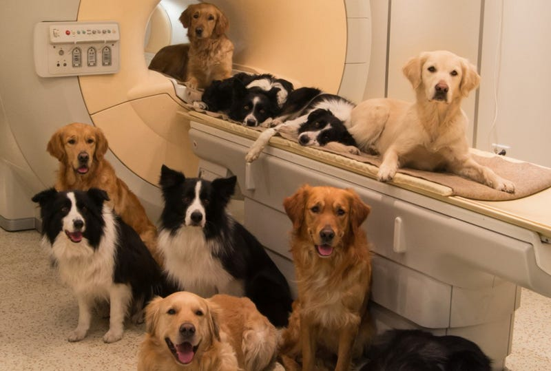 Why the Brains of Dogs and Humans Are More Similar Than You Think