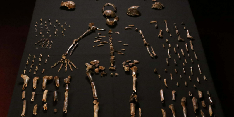 Scientists Have Discovered a New Human-Like Species in South Africa