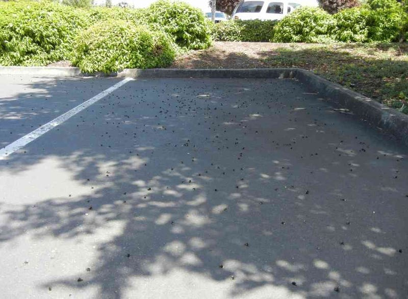 25,000 Bees Discovered Dead in Oregon Parking Lot