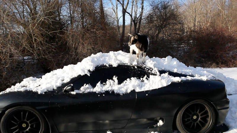 Goats Atop Ferraris, Part Deux: Snowpocalypse Edition