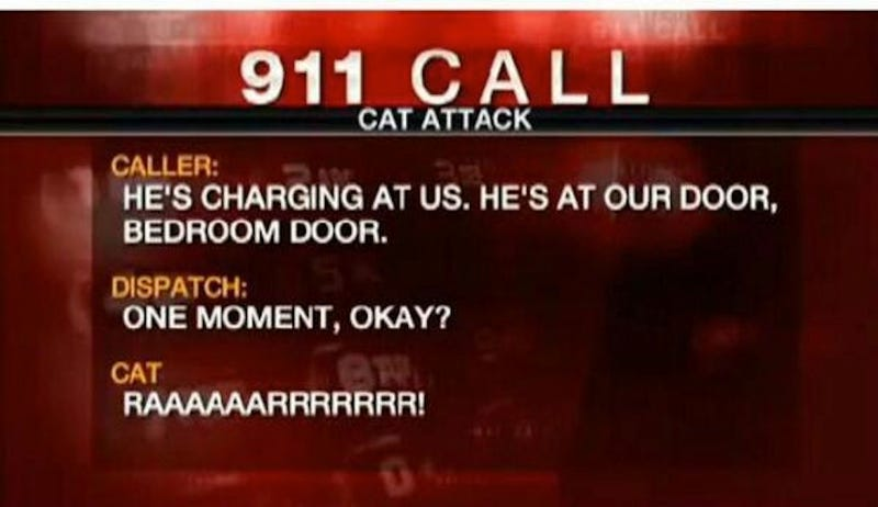 "Man Calls 911 After ""Hostile"" 22-Pound Cat Traps Family in Bedroom"