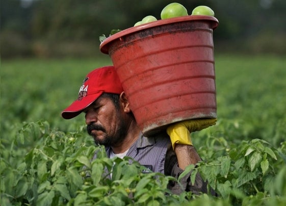 Greedy Farmworkers Are Coming For Your Pennies!