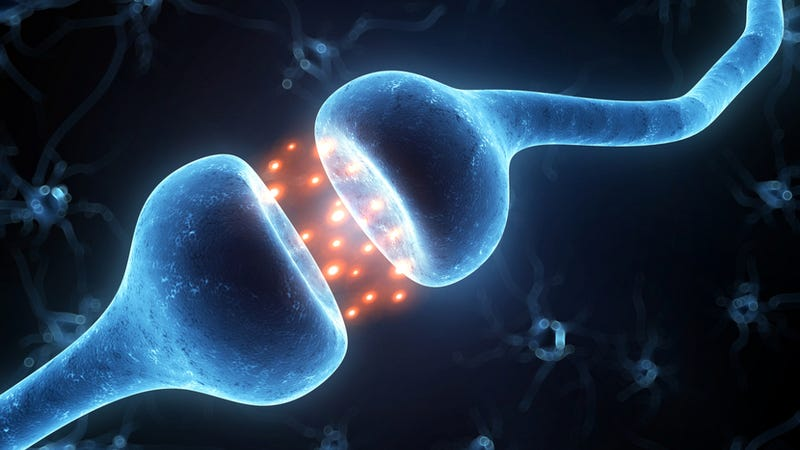 Does consciousness arise from quantum processes in the brain?