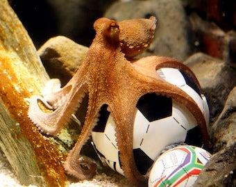 Paul The Oracle Octopus Dies