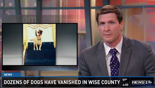 Forty Dogs Just Vanished From a Small Texas Town