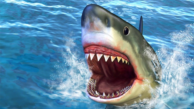 San Diego Beach Evacuated After Big Shark Sighting