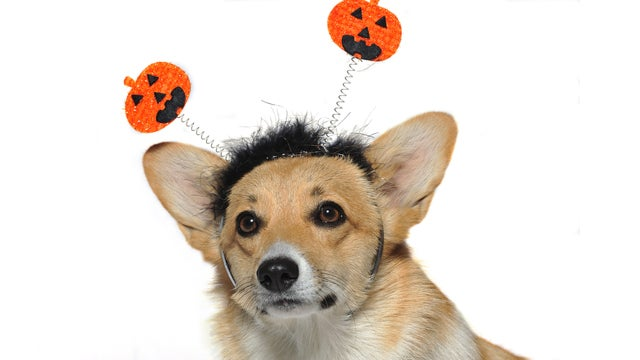 Don't Let Your Pet Become A Trick-Or-Treat Casualty