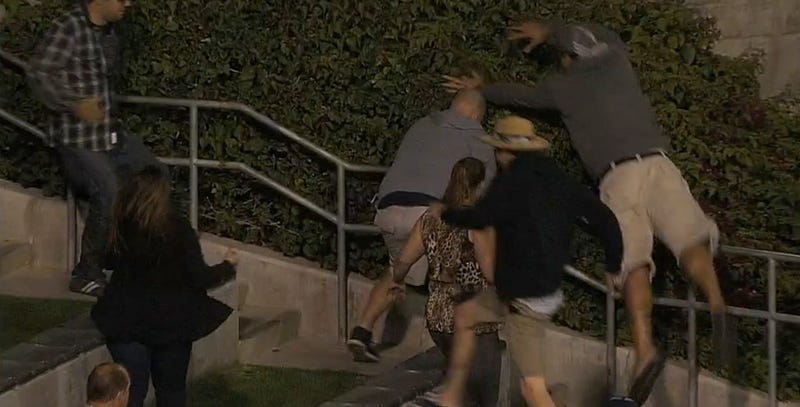 Fan In San Diego Can't Get To Home Run Ball, So He Leaps Into Bushes