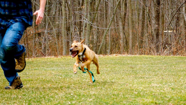 Best Way To Train A Dog From Running Away