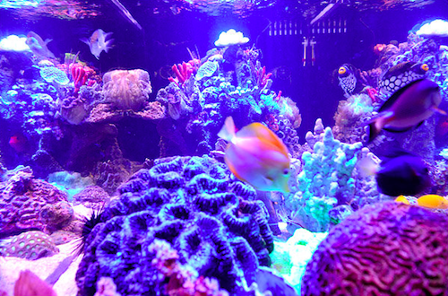 Tales From the Recession: The Ins and Outs of Manhattan's $200,000 Fish Tanks
