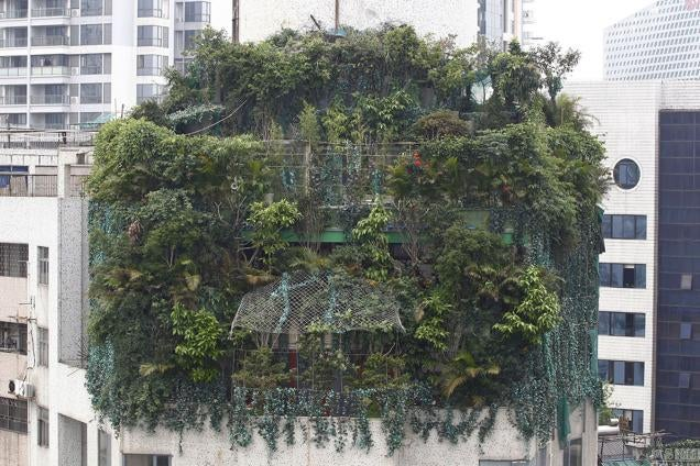 China's Jungle in the Sky Is a Rooftop Camouflage Fail