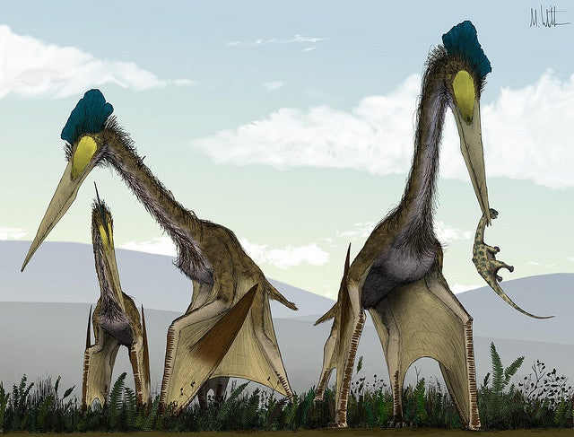 This is one of the scariest (and wrongest) pterosaur pictures ever