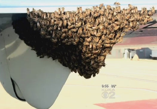 Nic Cage Meets Samuel L. Jackson at Pittsburgh International Airport as Swarm of Bees Takes Over Delta Plane