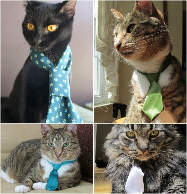 Cat Neckties Are Things That Exist; Are Popular