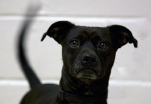 The Wonderful Flaws of Insane Shelter Dogs