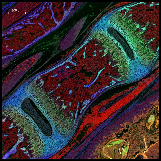 Marvel at 2013's best microscopic photography
